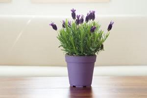 با این گیاهان، حشرات را از خانه و محیط اطراف خود دور کنید