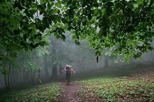 سفر به جنگلی که محل عبور فرشته ها است