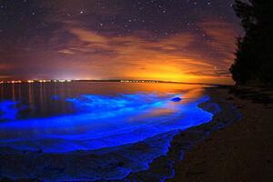 سواحل شب تاب خلیج موسکیتو، نورانی ترین خلیج جهان (+تصاویر)