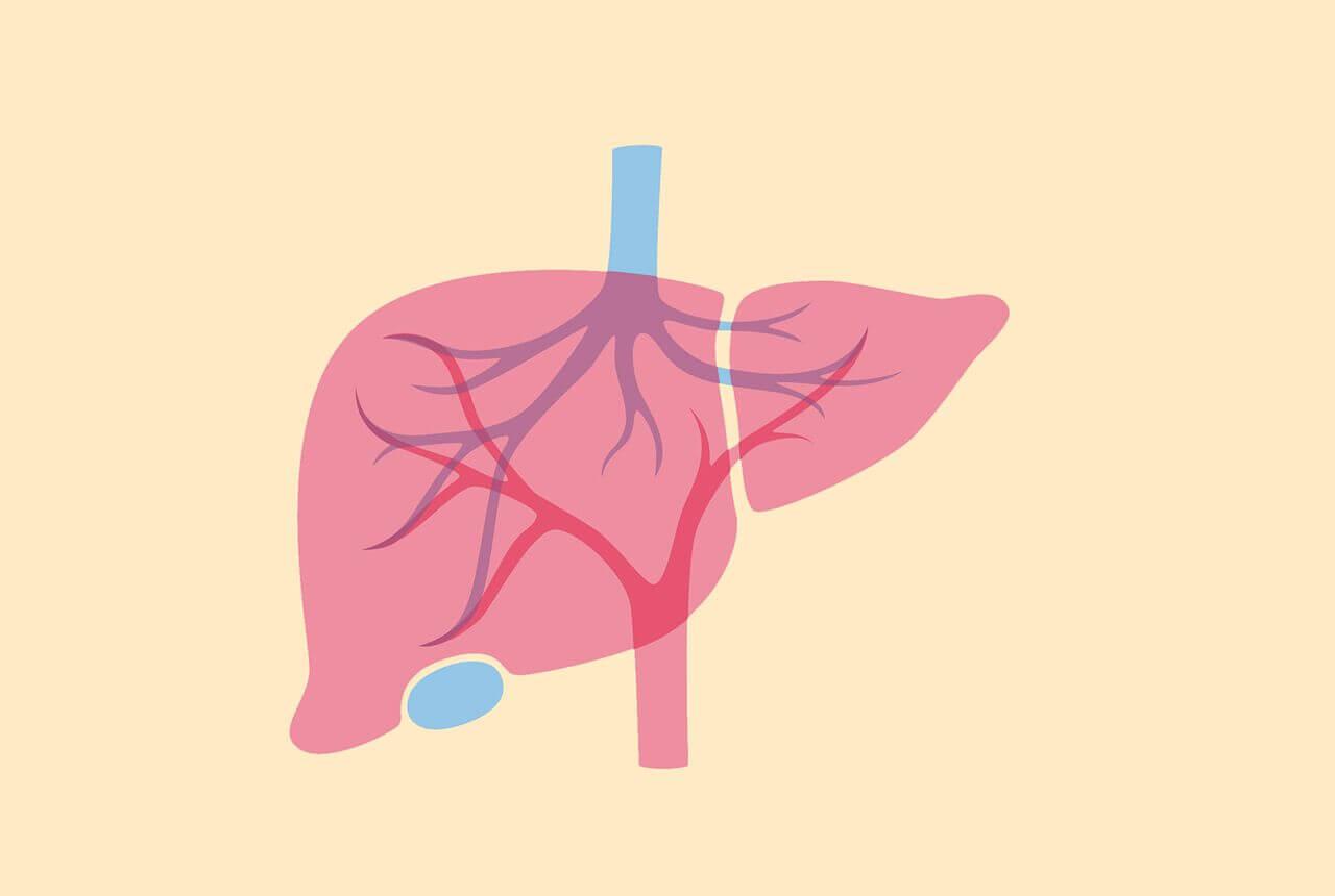عادتهای غلطی که شما را در معرض خطر سرطان کبد قرار میدهد